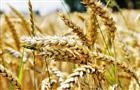 В Оренбуржье на поддержку элитного семеноводства из бюджета уже выплачено более 96 млн рублей