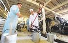 Самарские аграрии активно укрепляют межрегиональные связи