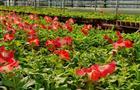 В 2020 г. в Самаре высадят 1 млн цветов