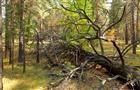 У пос. Винтай разыскали заблудившуюся в лесу женщину