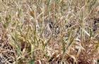 Правительство РФ выделит 234 млн рублей дотаций самарским растениеводам