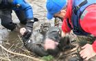 В Исаклинском районе утонул рыбак