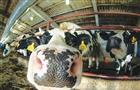 Минсельхоз определил, сколько будут получать фермеры за произведенное молоко