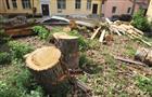 Депутаты предлагают увеличить штрафы за вырубку деревьев