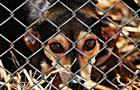 В регионе установили порядок организации приютов для животных