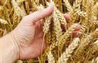Защита растений помогла сберечь урожай