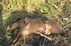"""В нацпарке """"Самарская Лука"""" снова зафиксировали браконьерство"""