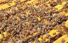 В Уфе пройдет Международный онлайн-симпозиум пчеловодов