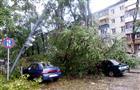В Самаре дерево, оборвав линии электропередачи, обрушилось на три автомобиля