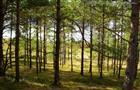В Самаре решается судьба почти 5 тыс. га леса