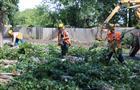 Самарцы устроили пикет, не позволяя спилить деревья в охранной зоне насосной станции