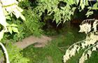 В Сызрани при опиливании деревьев погиб сотрудник УК