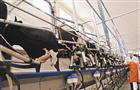 Рынок урегулировал цены на молочную продукцию
