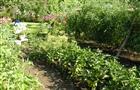 Правила ухода за овощами посаженными в открытом грунте