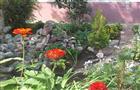 Лучшие цветники у домов Тольятти не остались незамеченными