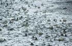 Синоптики прогнозируют дожди с градом в регионе