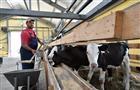 Фермеры Самарской области получат гранты на развитие хозяйств