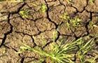 В Самарскую область направлены деньги на преодоление последствий засухи