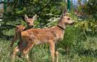 В сафари-парке в Самарской области появились два детеныша косули