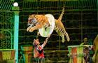 Всего четыре представления: Королевский цирк Гии Эрадзе завершает гастроли в Самаре