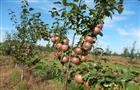 """Глеб Никитин: """"Около 30 млн руб. будет направлено на развитие садоводства в регионе"""""""