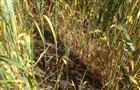 Региону готовы возместить потери урожая на 600 млн рублей