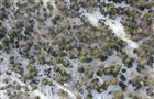 Глеб Никитин: Площадь космического мониторинга лесов в Нижегородской области увеличится в 2,5 раза