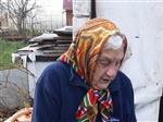 Родственники старушки из Тимофеевки, которая три месяца жила в курятнике, пообщались со СМИ