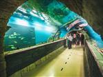 Стала известна дата открытия самарского океанариума