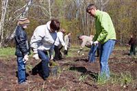 В Самарской области почти за месяц посадили 3 млн молодых деревьев