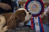В Самаре прошла крупная выставка с участием самых редких и дорогих пород собак