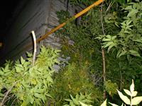 В Самаре старое дерево рухнуло рядом с ветхим домом по ул. Аксаковская, 6, оборвав провода