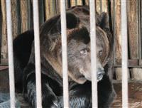 В Самарском зоопарке отметят день рождения медведя