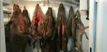"""Дело о браконьерстве в """"Самарской Луке"""" пытались прекратить в третий раз"""
