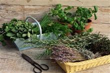 Выращиваем на участке лечебные растения