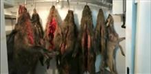 """Дело о браконьерстве в """"Самарской Луке"""" пытаются закрыть"""