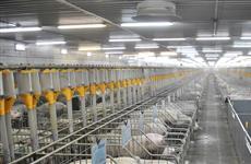 """Агрохолдинг """"Йола"""" строит свинокомплекс на 44 тыс. голов в Марий Эл"""