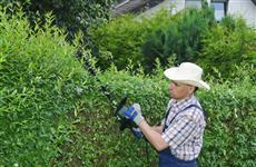Создаем живую изгородь на загородном участке
