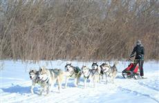 На озере Снежное в новогодние каникулы будет работать зимний лагерь хаски