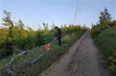 Тольяттинские полицейские задержали подозреваемого в поджоге леса