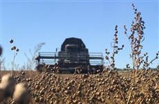 """Агрохолдинг """"Зерно Жизни"""" собрал более 153 тыс. т ранних культур"""
