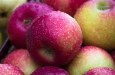 В Курумоче у пассажиров изъяты яблоки и нектарины с вредителями
