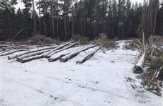 Из-за незаконной вырубки сосен в Шигонском районе возбудили уголовное дело
