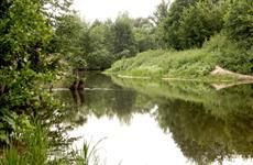 Сохранение лесов и водных объектов, переработка отходов: какие экопроекты реализуют регионы ПФО