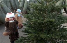 Определены места, где в Самаре будут торговать новогодними елками