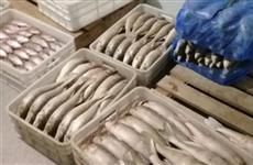 В незаконной добыче стерляди оказались замешаны две крупнейшие самарские рыболовные артели