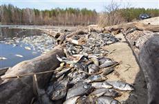 На реках Кировской области на два месяца запретили промышленный лов рыбы