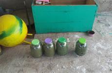 Пожилой сельчанин насушил себе 12 кг марихуаны