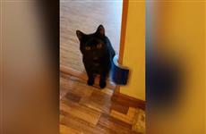 В Самаре возбудили уголовное дело из-за издевательств над котом