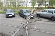 В Тольятти администрация школы заплатит за упавшее на автомобиль дерево